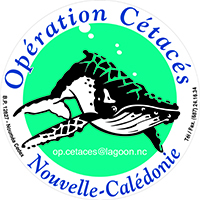 logo operations cetaces_blog