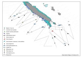 Premières cartes réalisées à partir des données brutes, positionnant les observations des différents animaux (ici les mammifères marins) sur les transects (lignes) parcourus. ©Agence des aires marines protégées/observatoire Pelagis – REMMOA 2014