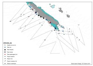 Première carte réalisée à partir des données brutes, positionnant les observations des différents animaux sur les transects (lignes) parcourus. ©Agence des aires marines protégées/observatoire Pelagis – REMMOA 2014