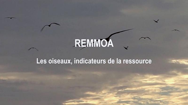 Les oiseaux indicateurs de la ressource_Blog